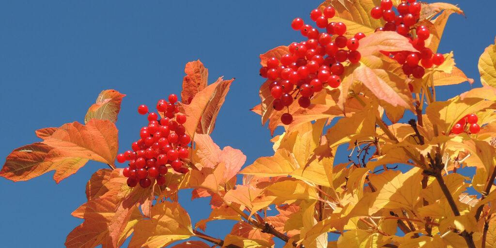Золотая сибирская осень