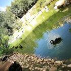 Израиль. Иерусалим. Зоопарк