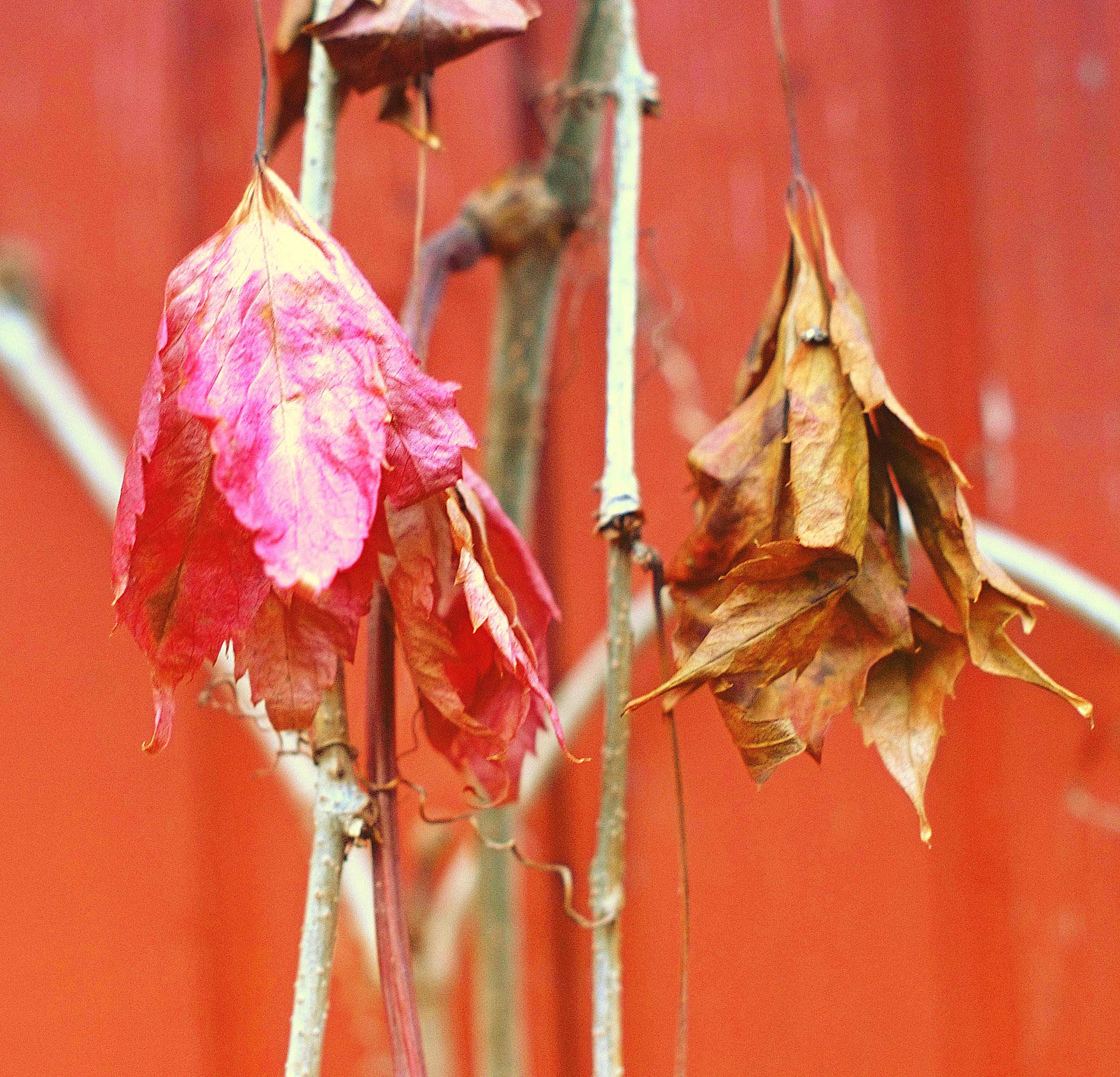 Поздняя осень надревний Такумар.