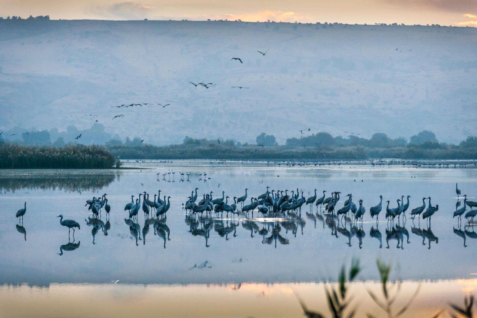 Долина Хула— пристанище перелётных птиц.